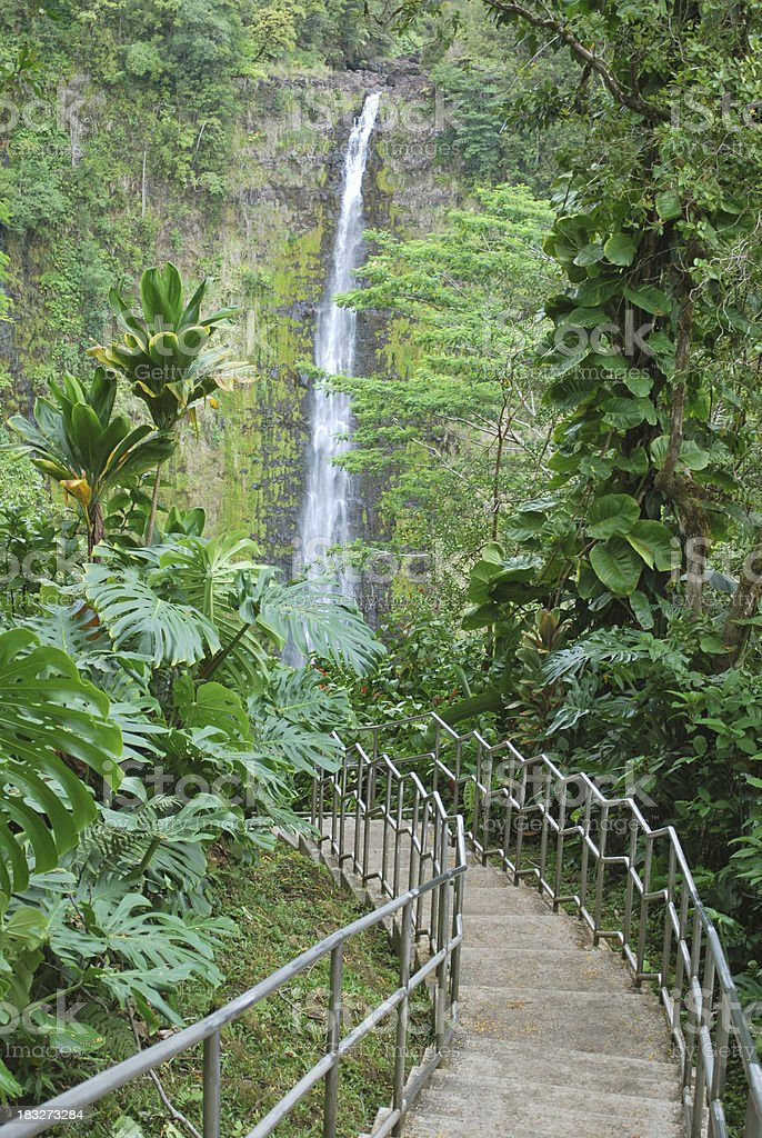 Akaka Falls State Park, Big Island, Hawaii. royalty-free stock photo