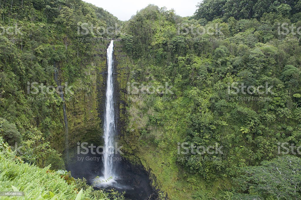 Akaka Falls State Park royalty-free stock photo