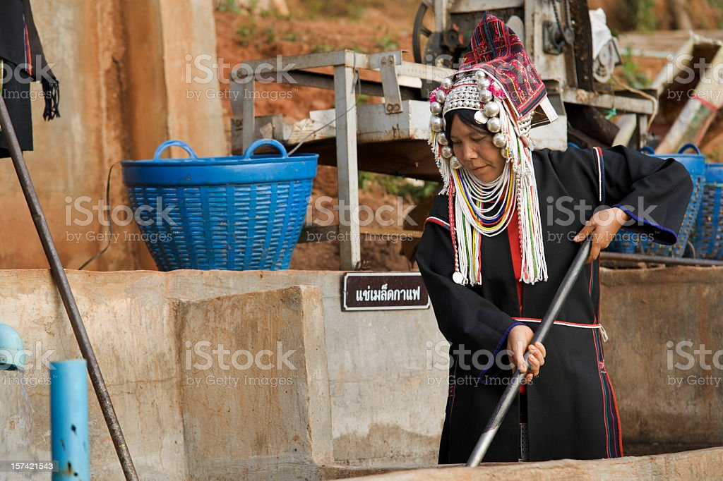 Akha Coffee Worker stock photo