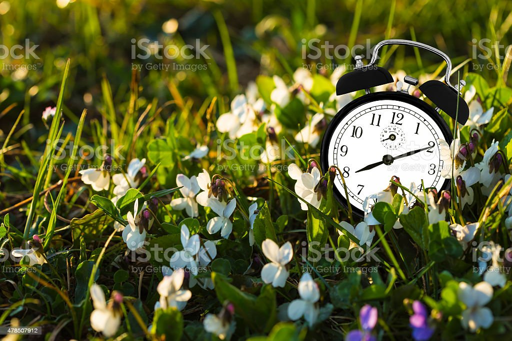 Alarm clock and flowers stock photo