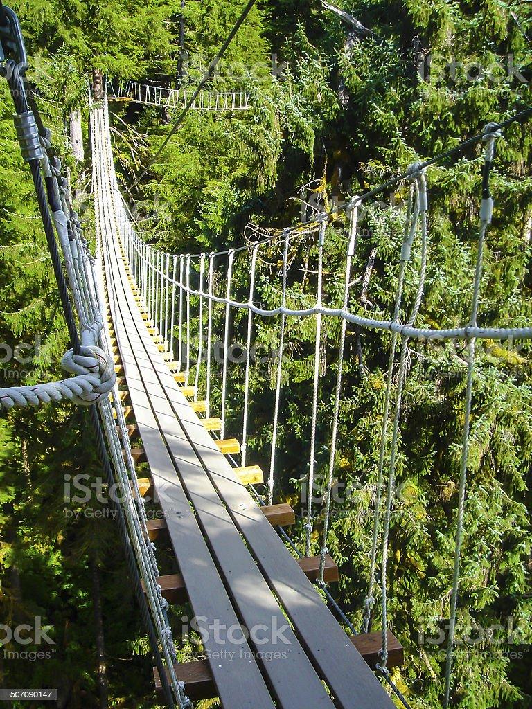 Alaska canopy and zip line stock photo