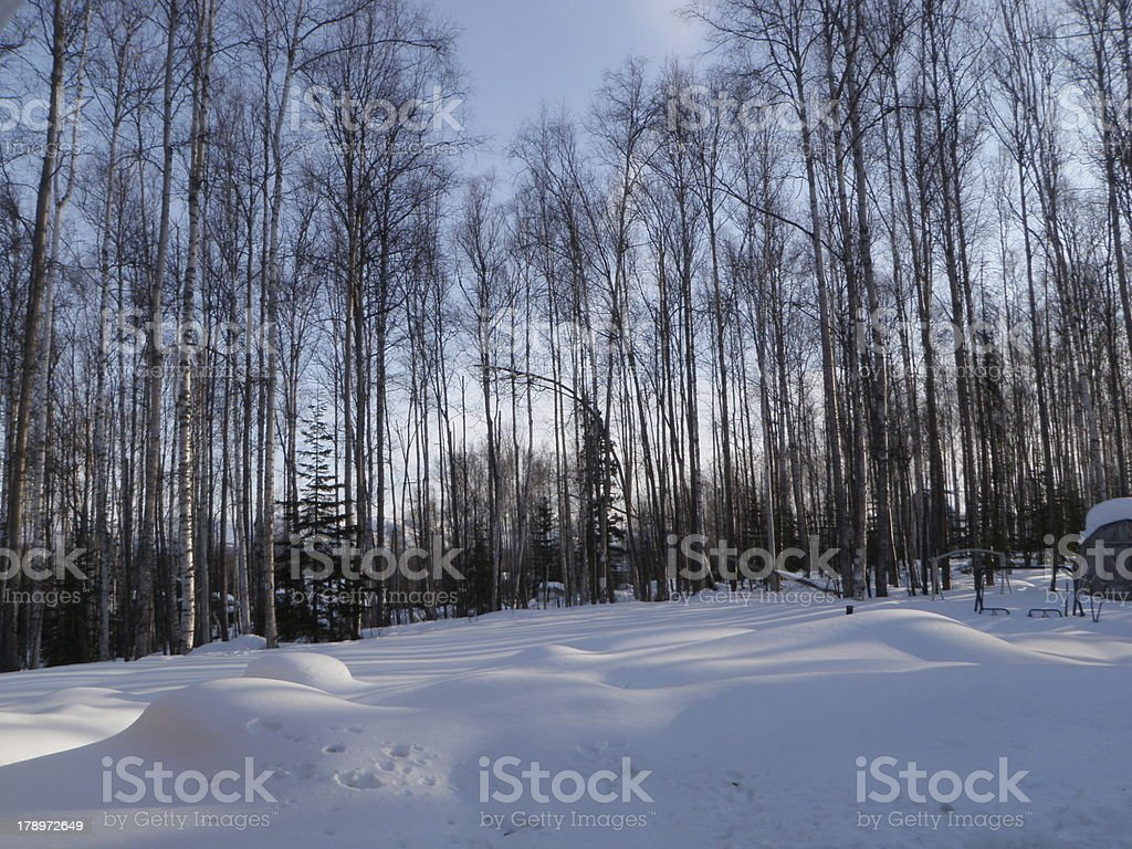 Alaska Forest in Winter stock photo