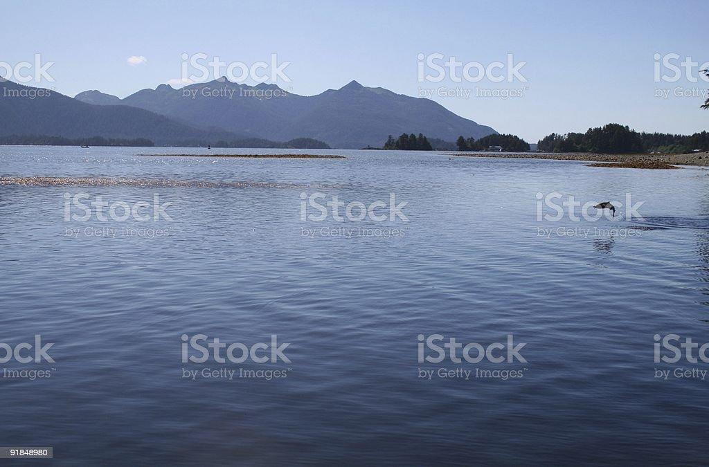Alaska Salmon Jumping stock photo
