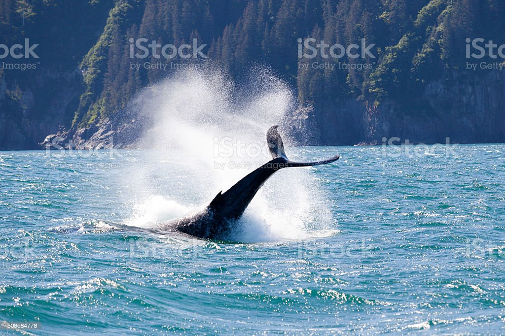 Alaska, Seward, Whale stock photo