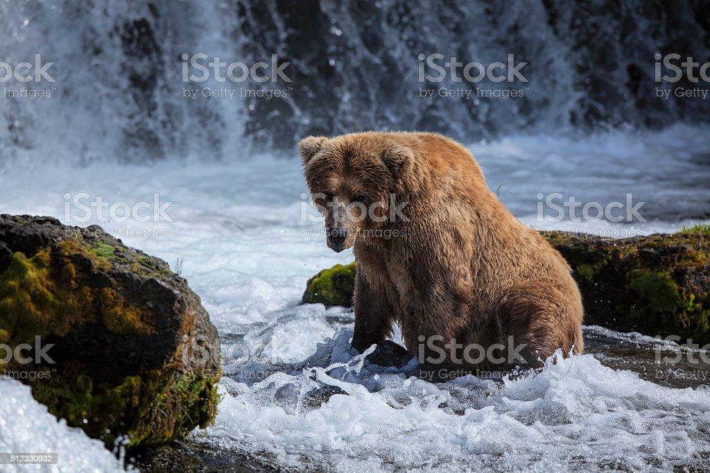Alaskan Brown Bear At Brooks Falls royalty-free stock photo