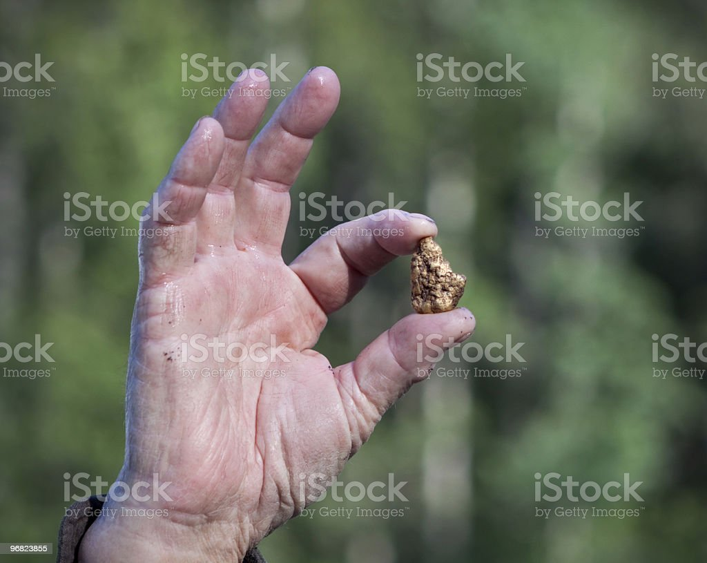 Alaskan gold nugget held by adult fingers. stock photo