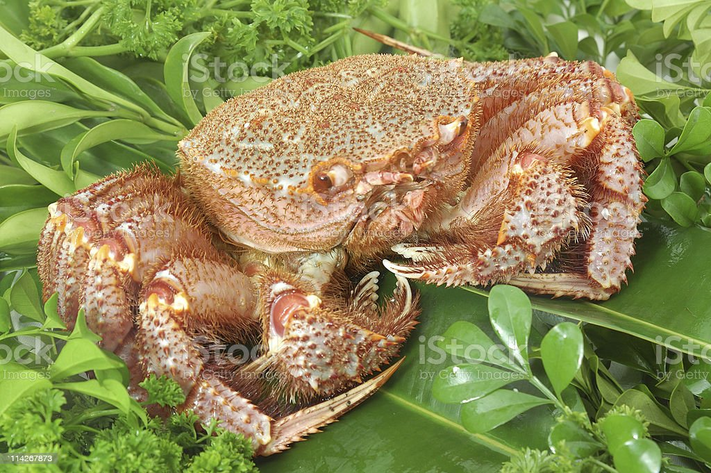 Alaskan king crab stock photo