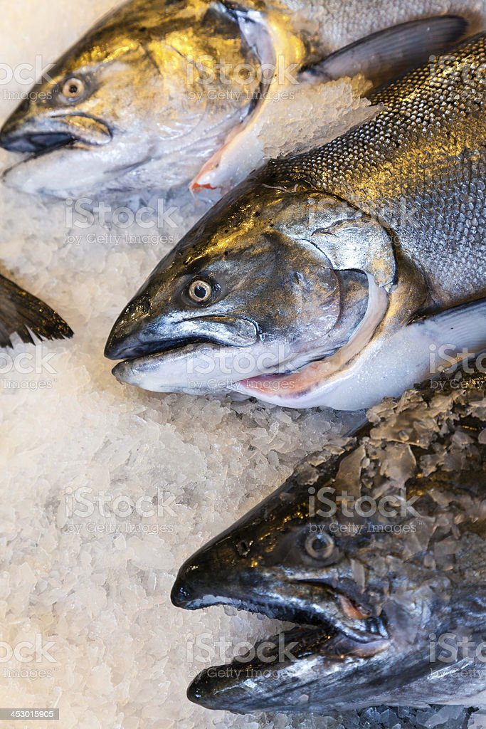 Alaskan King Salmon Fish on Ice Fishmongers Market stock photo