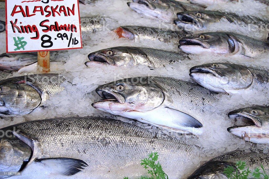 Alaskan King Salmon stock photo