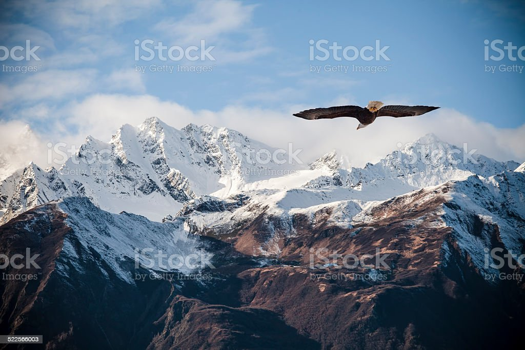 Alaskan mountains with flying eagle. stock photo