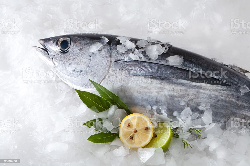 Albacore fish (Tunnus Alalunga) stock photo