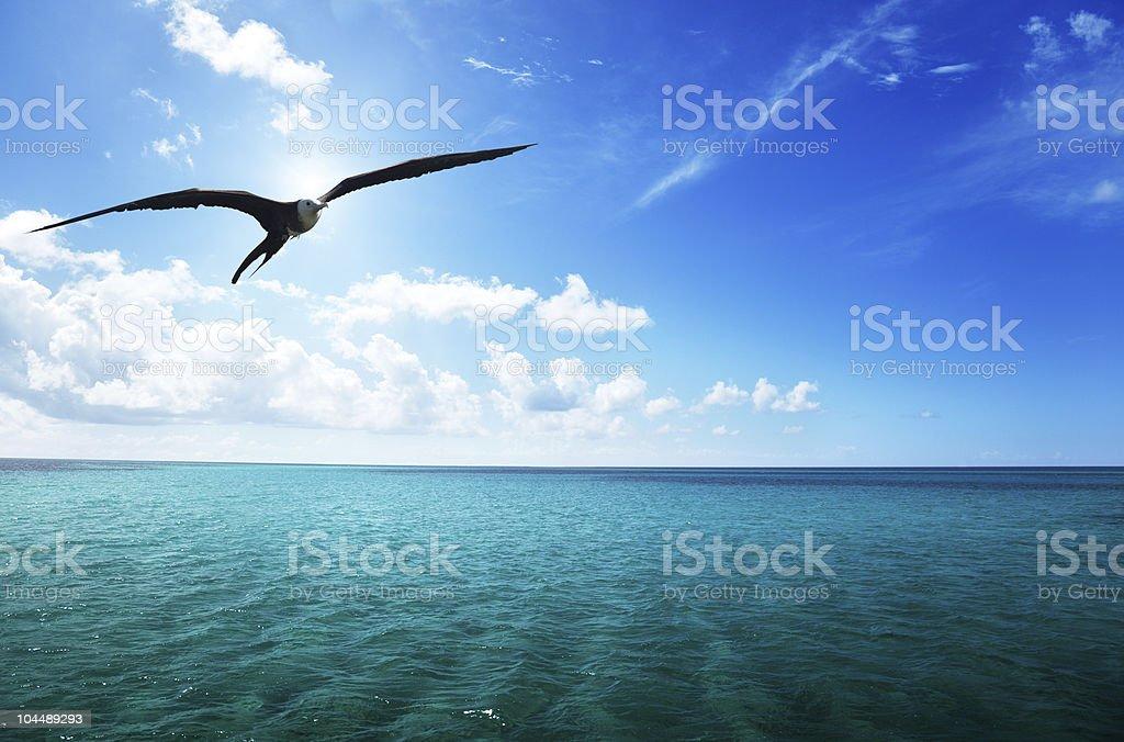 albatross and caribbean sea stock photo