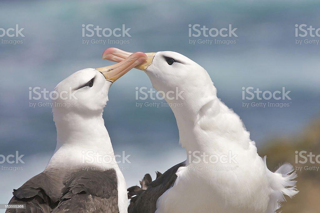 Albatross on the Beach stock photo