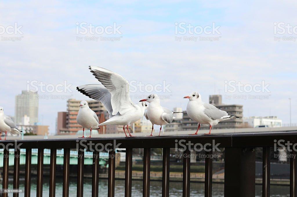 albatross stock photo