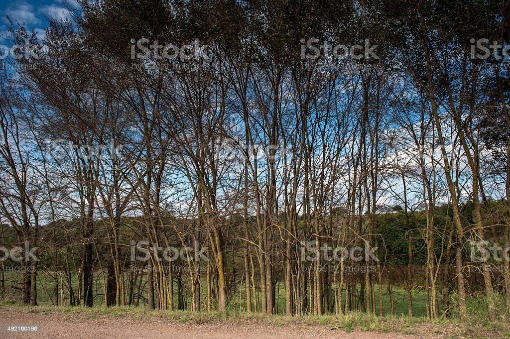 alberi in fila stock photo