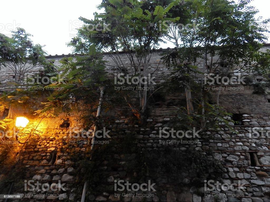 Alberi nel muro medioevale stock photo