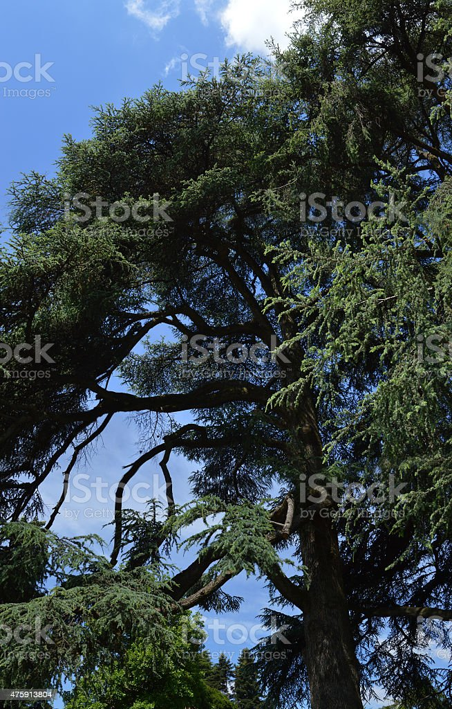 albero stock photo