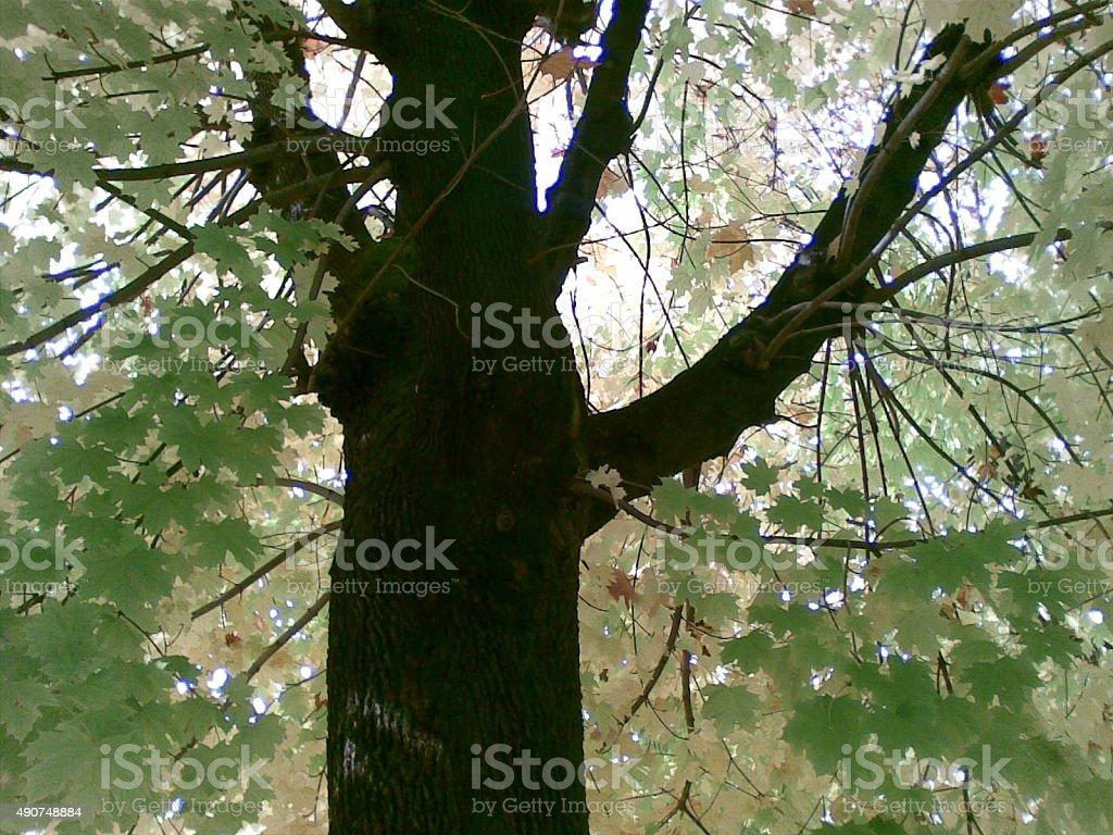 Albero,Foglia,Natura,Crescita,Idillio stock photo
