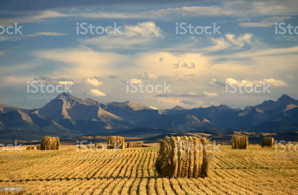 Alberta Scenic With Agriculture and Harvest Theme royalty-free stock photo