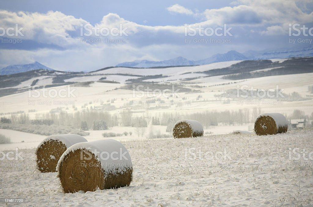 Alberta Winter royalty-free stock photo