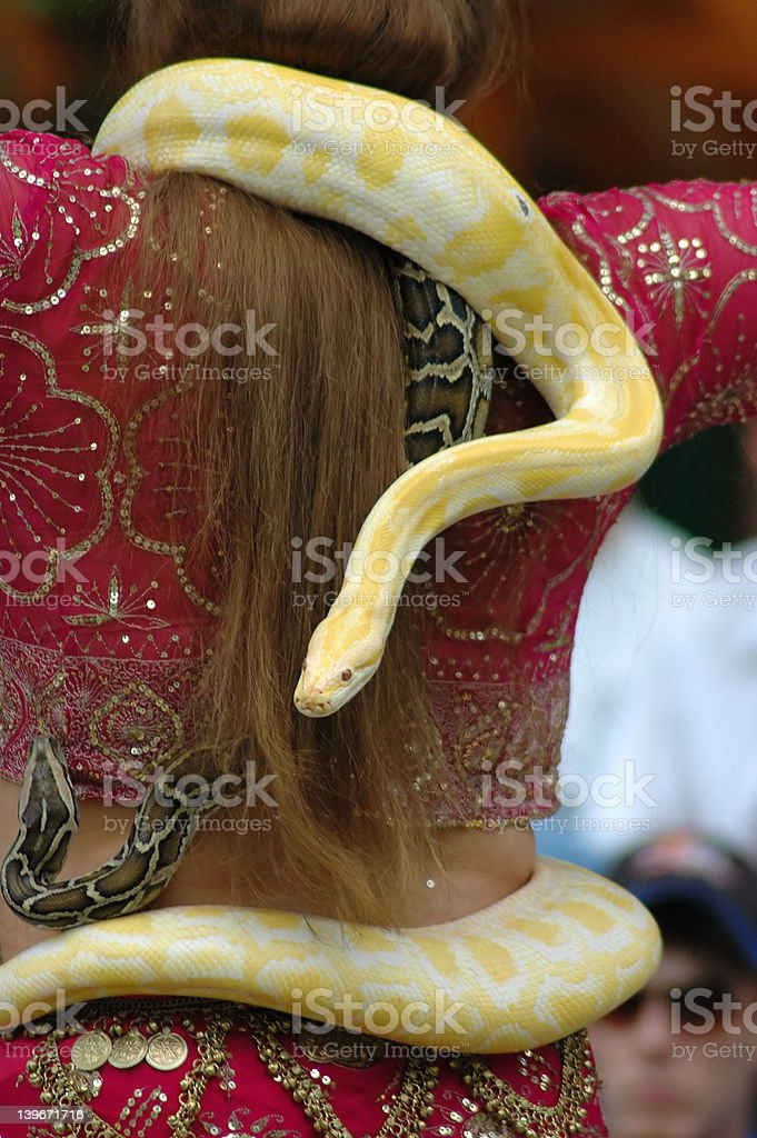 Albino Burmese Python royalty-free stock photo