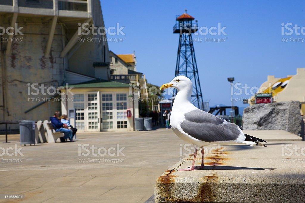 Alcatraz, outside with seagull stock photo