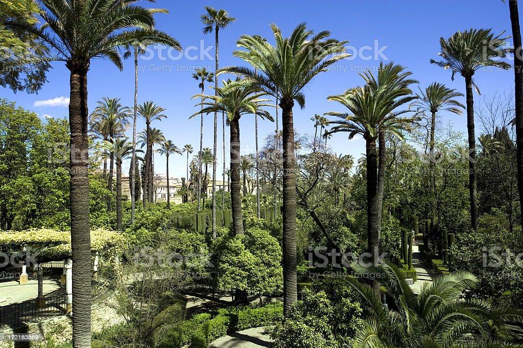 Alcazar palm trees royalty-free stock photo