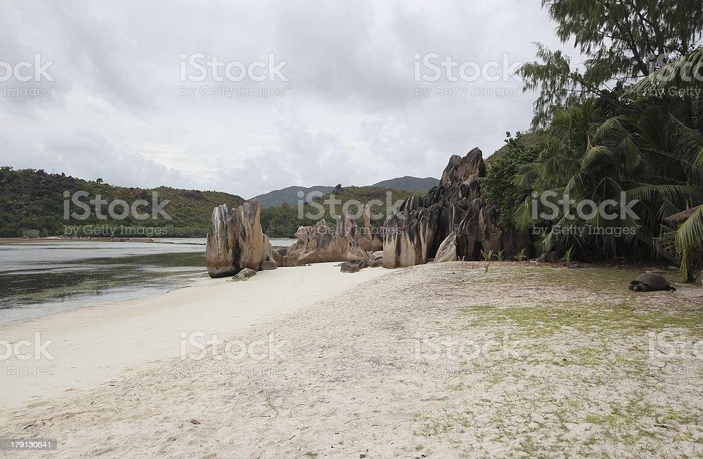 Aldabra Giant Tortoise, Aldabrachelys gigantea at the Beach, Seychelles royalty-free stock photo