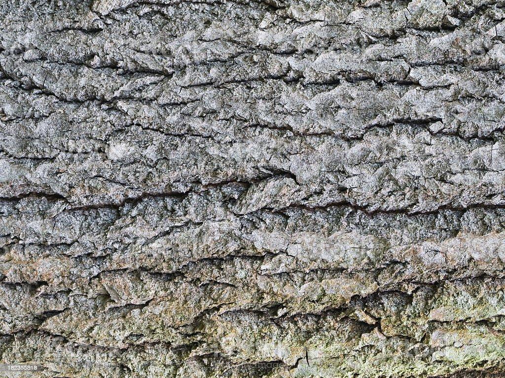 Alder bark stock photo