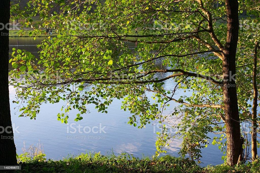 Alder on coast of lake stock photo