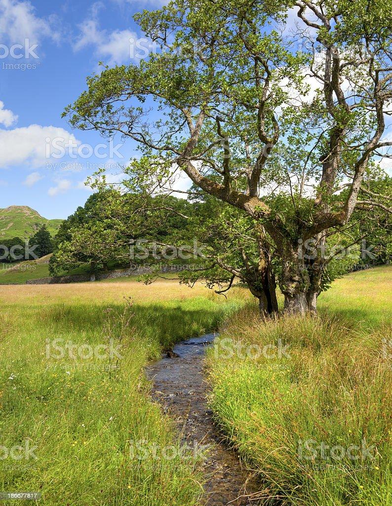 Alder tree and stream royalty-free stock photo