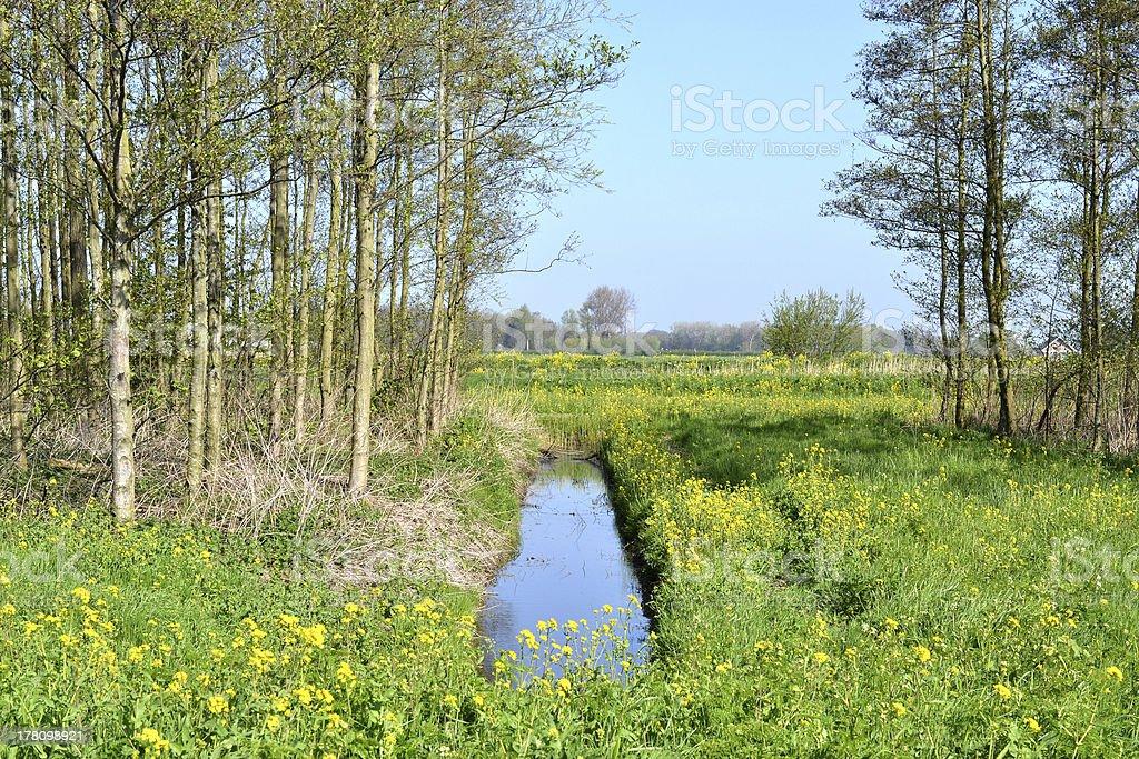 Alder trees in spring. stock photo
