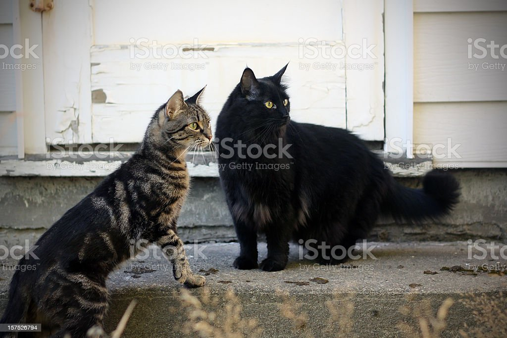 Alert Cats stock photo