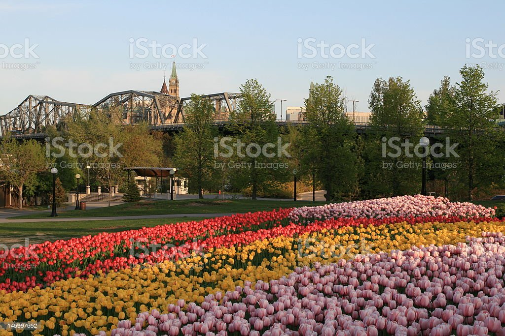 Alexandra Bridge and Peace Tower in the Canadian Tulip Festival stock photo