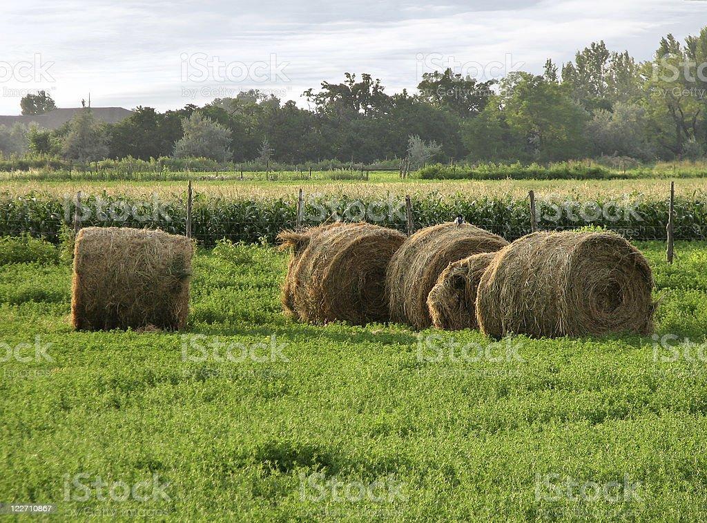 Alfalfa bales in field royalty-free stock photo