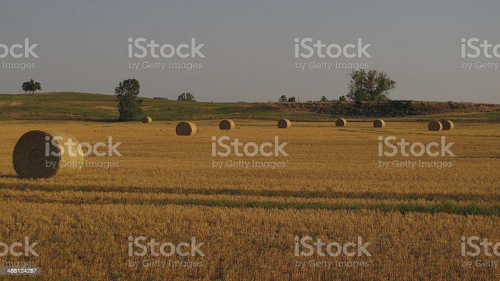 Alfalfa Bales stock photo