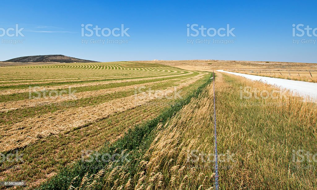 Alfalfa Field in the Pryor Mountains in Montana US stock photo