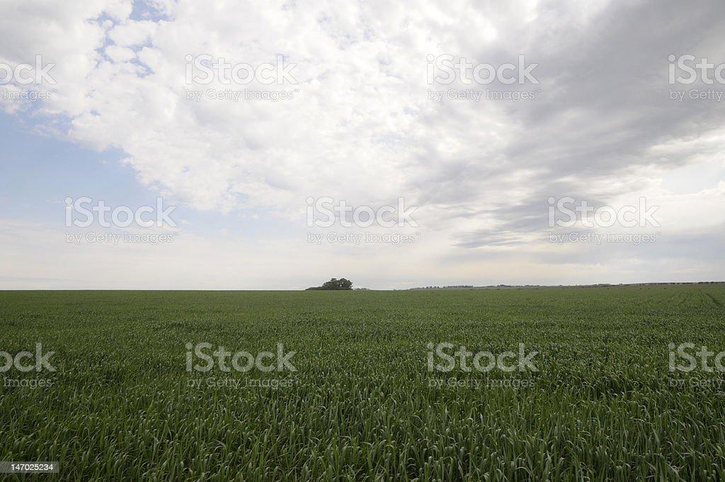Luzerne field photo libre de droits