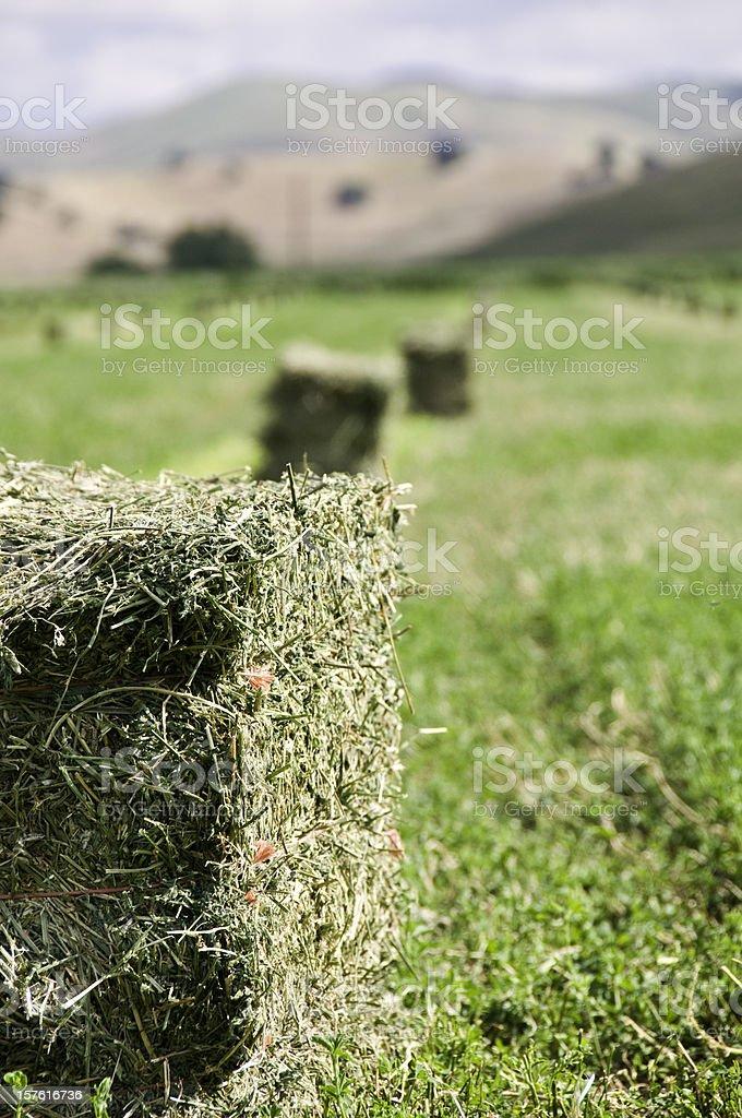 Alfalfa Harvest royalty-free stock photo