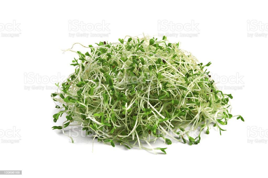 alfalfa sprouts royalty-free stock photo
