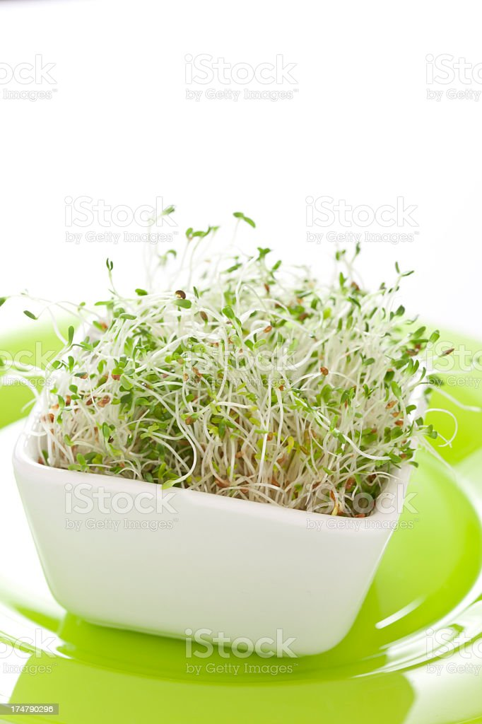 Alfalfa sprouts royalty-free stock photo