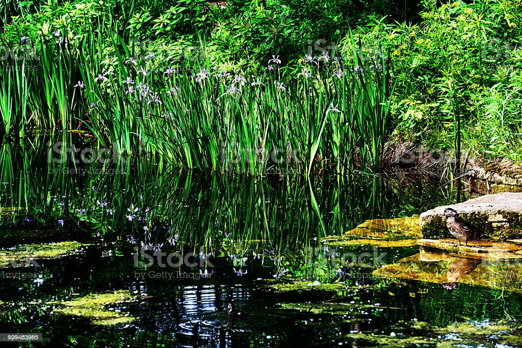 Alfred Caldwell Lily Pool in Lincoln Park,  Chicago stock photo