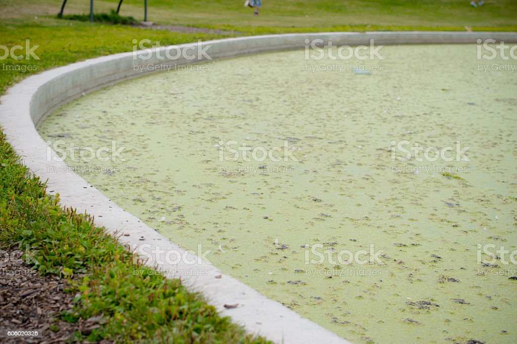 algae and wastes on a pond stock photo