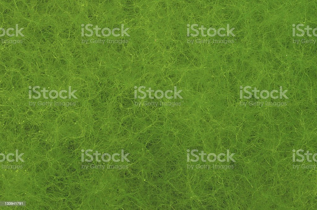 Algae Background royalty-free stock photo