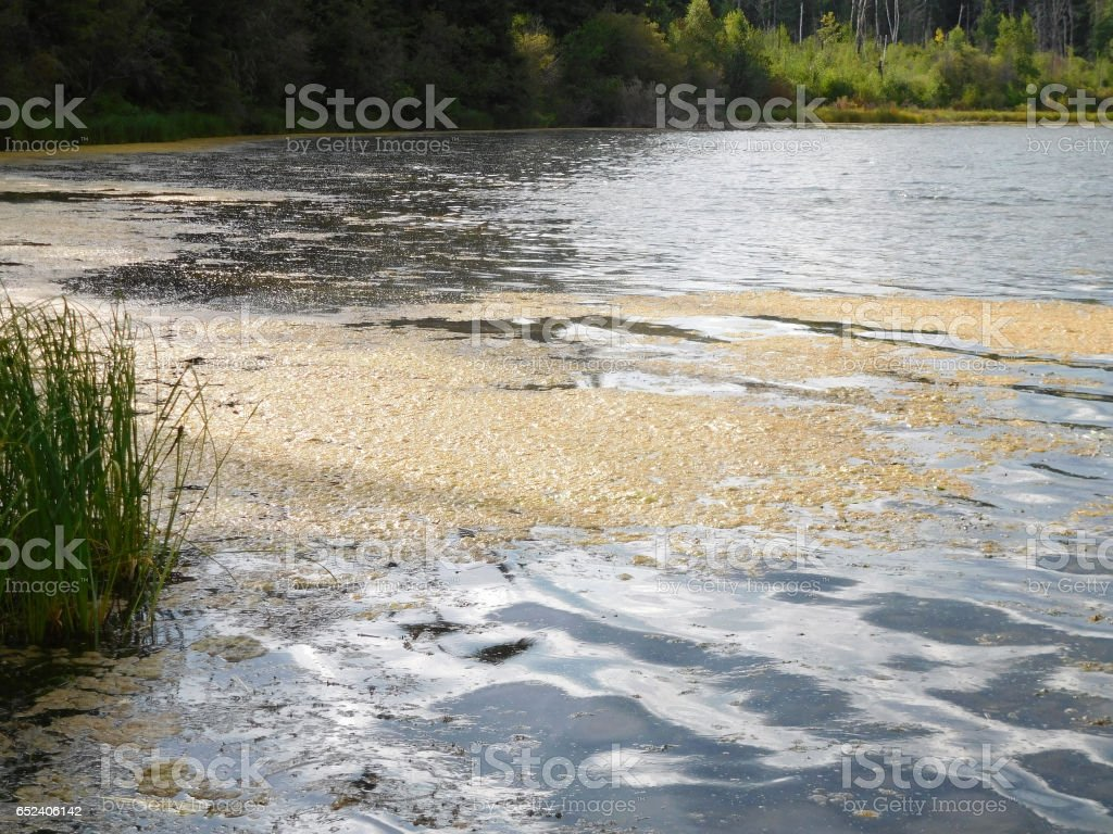 Algae bloom during a hot summer stock photo
