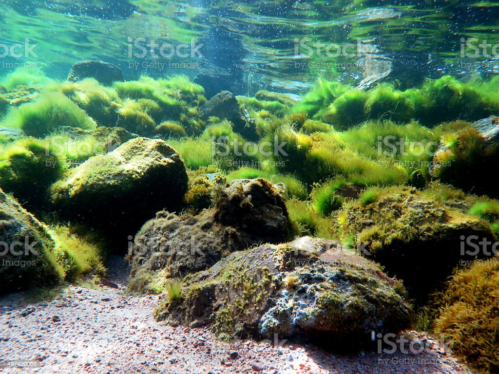 Algae bloom stock photo