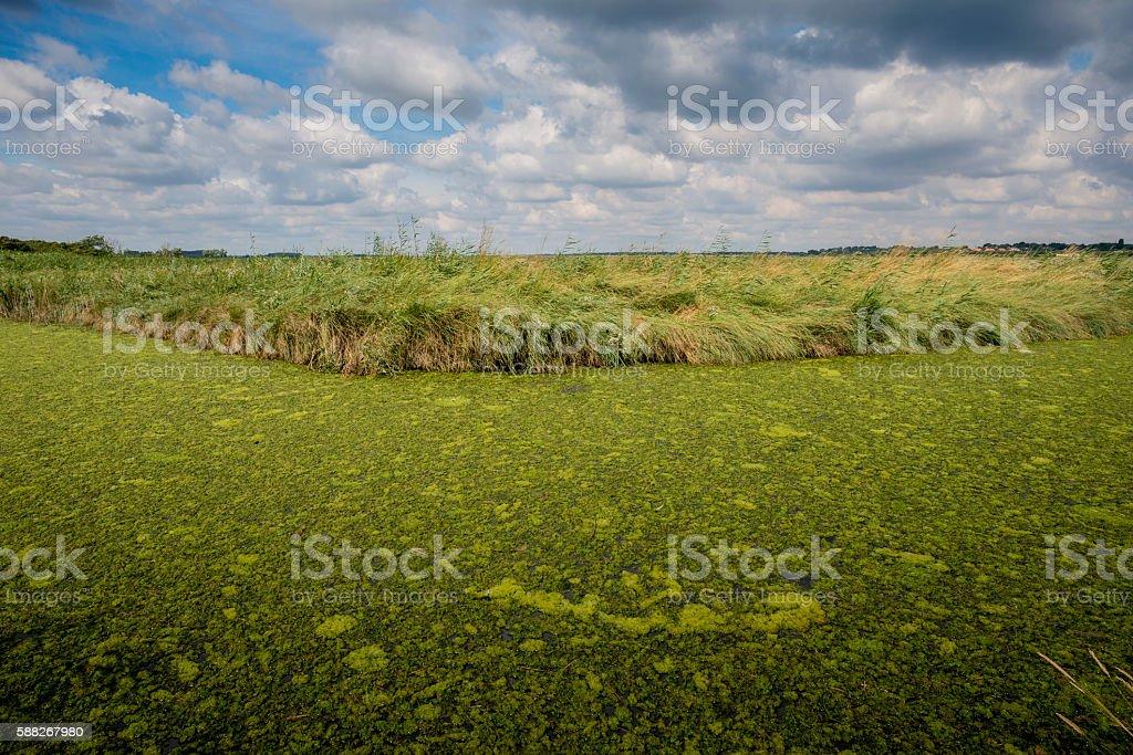 Algae Covered River stock photo