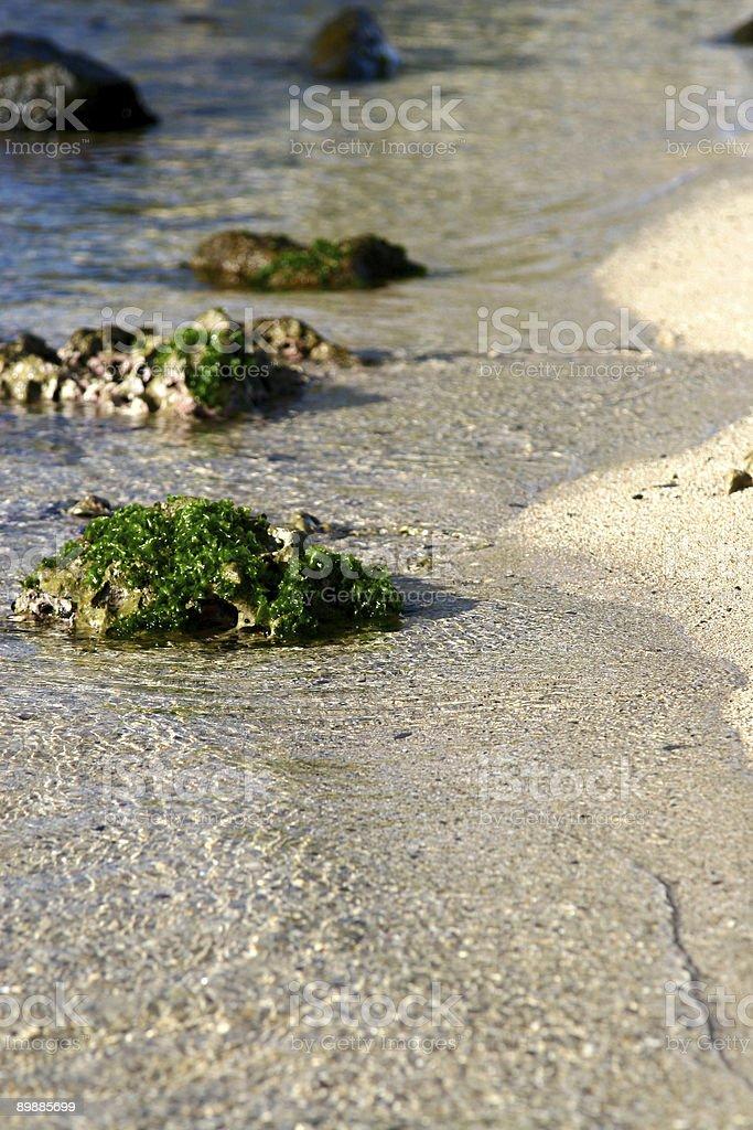 Algae covered rocks royalty-free stock photo