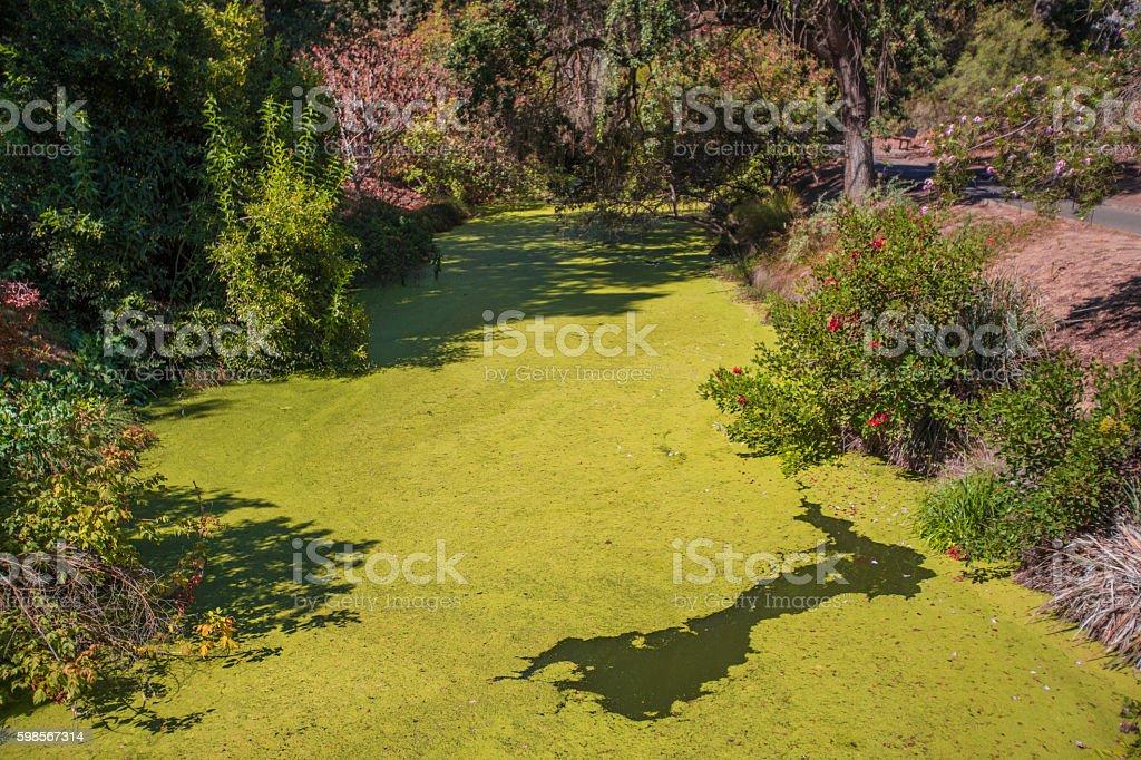 Algae in river stock photo