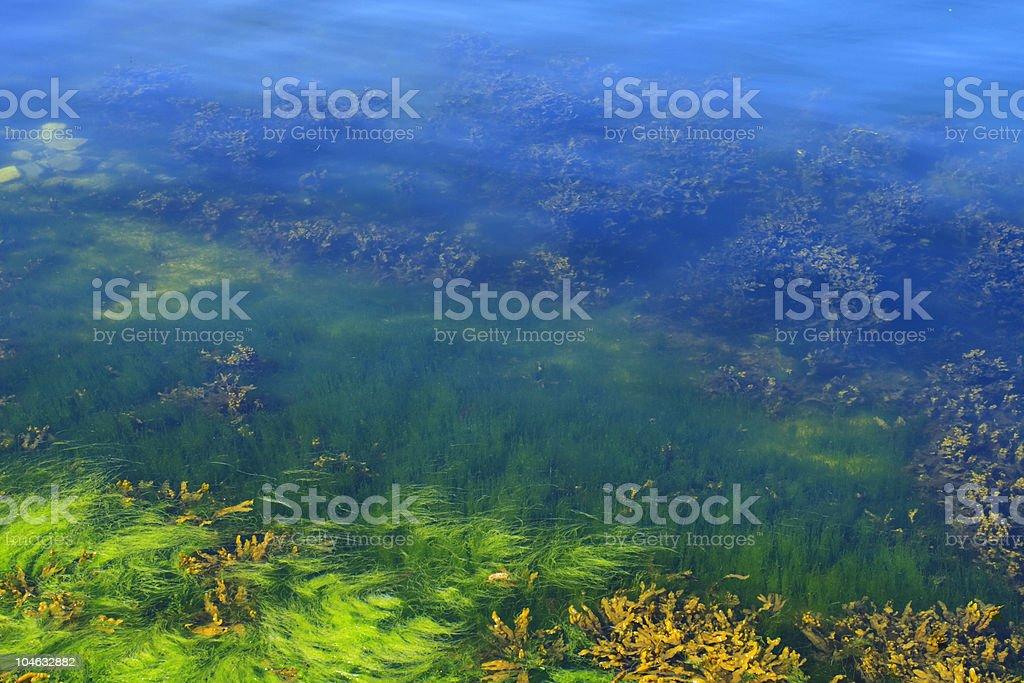 Algae in the ocean floor royalty-free stock photo